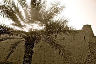 Palm and a fort -- Nizwa, Oman