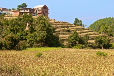 Field -- Baktapur, Nepal