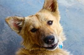 Dog -- Pokhara, Nepal