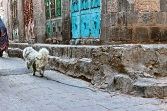 Dog on the loose -- Sana'a, Yemen