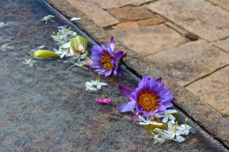 Flowers -- Anuradhapura, Sri Lanka