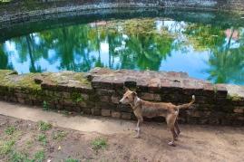 Water tank -- Anuradhapura, Sri Lanka