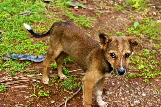 Puppy -- Mihintale, Sri Lanka