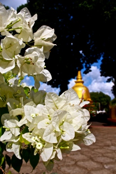 Flowers and a dagoba -- Dambulla, Sri Lanka
