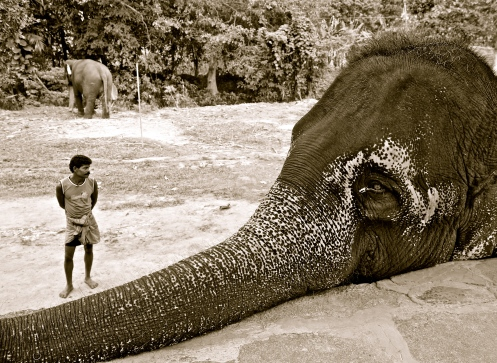 Elephant and his mahout -- near Kegalle, Sri Lanka