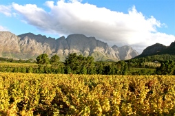 Field -- Franschhoek, South Africa