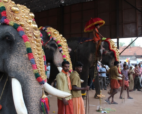 Elephants and their mahouts -- Kollam, Kerala, India